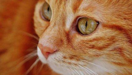 Lo que más les gusta a los gatos es relacionarse con los humanos