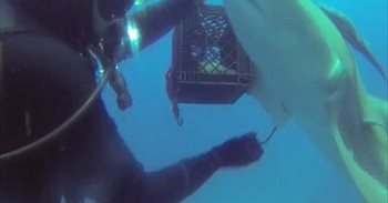 Vídeo: Un tiburón lesionado pide ayuda a un buceador en varias ocasiones