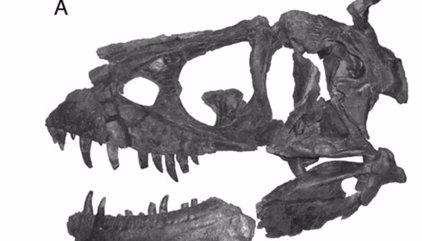 Nuevo tiranosaurio sofistica el 'look' y los sentidos de la especie