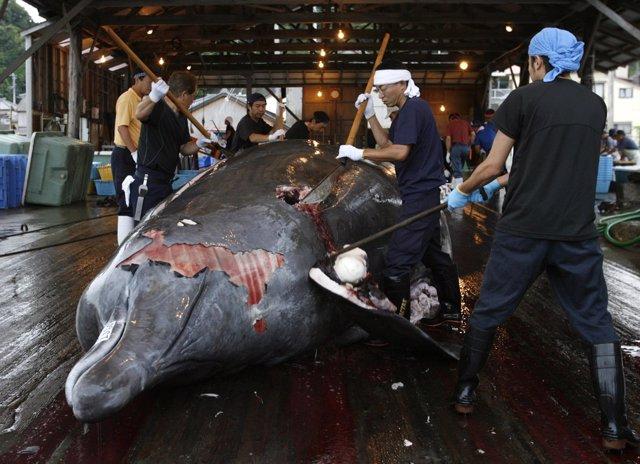 Pesca de ballenas en Japón suspendida al no tratarse de fines científicos