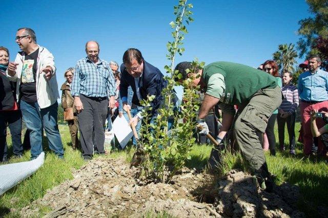 Fernández Vara durante la plantación de un árbol
