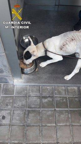 Imagen del perro que sufrió maltrato