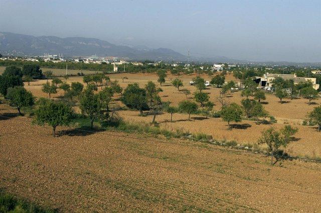 El Govern aprobará un decreto para facilitar las exoneraciones de edificaciones e instalaciones agrarias