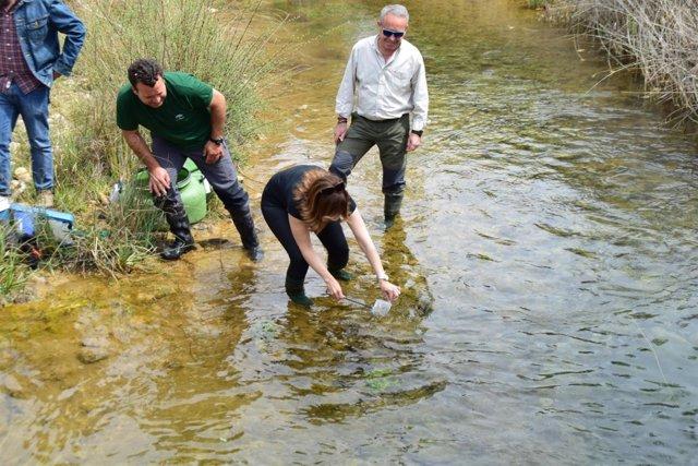 Liberación de trucha común en el río Cacín