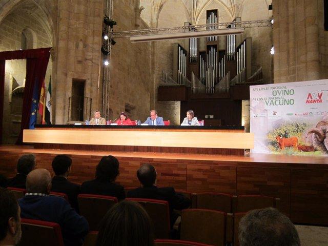Lonja de ovino y vacuno que se celebra en Cáceres