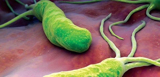 Bacteria 'h pylori'