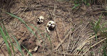 """La ONU se muestra """"horrorizada"""" al ver un vídeo del asesinato por..."""