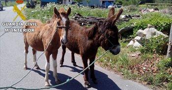 Tres detenidos por la sustracción de yeguas, un burro, cabras y un potro