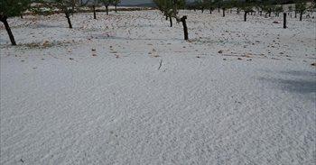 Una gran tormenta de agua y piedra produce numerosos daños en cultivos de...
