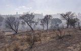 Hasta 70 especies de aves, 40 variedades de plantas y 38 mamíferos, afectados por el fuego de Doñana, según SEO/Birdlife