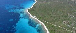 Investigadores revelan cómo se forman los 'círculos de hadas' en las praderas submarinas de la 'posidonia' mediterránea