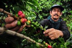 El calentamiento global podría reducir la producción del café hasta un 88% para 2050