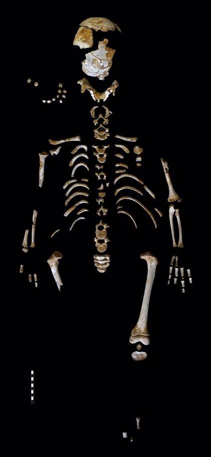 Los neandertales tenían un patrón de crecimiento muy similar al de los humanos modernos, incluyendo su cerebro