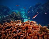 La UICN advierte de que cumplir los objetivos del Acuerdo de París es la última oportunidad para los arrecife de coral
