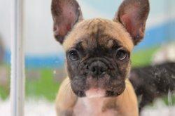 Equo pide al Gobierno que se una a otros países de la UE en la lucha contra el tráfico ilegal de cachorros en Europa