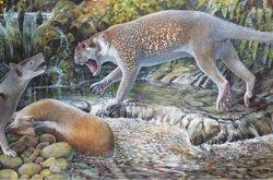 Descubren en Australia una nueva especie de león marsupial extinto de hace 20 millones de años