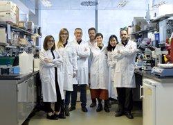 Investigadores españoles descubren a los responsables de la aterosclerosis acelerada y muerte prematura en progeria