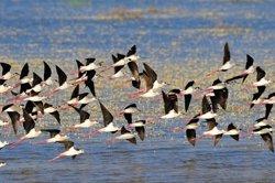 WWF exige a Ribera que salve Doñana y actúe con Andalucía para cerrar más de 1.000 pozos y cultivos ilegales