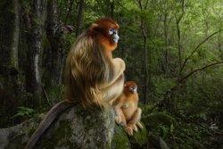 Llega a Madrid la exposición fotográfica sobre naturaleza 'Wildlife Photographer of the Year'