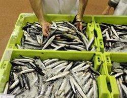 Pescadores del Cantábrico piden al Ministerio rebajar las cuotas de bocarte