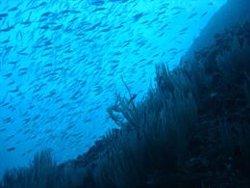 Las especies marinas podría reducirse un 17% a final de siglo por el calentamiento de los océanos