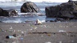 Casi el 60% de las playas canarias están afectadas por el plástico, según un estudio de Loro Parque Fundación