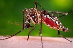 Confirman que los turistas islandeses diagnosticados con Chikungunya han dado negativo en los primeros análisis
