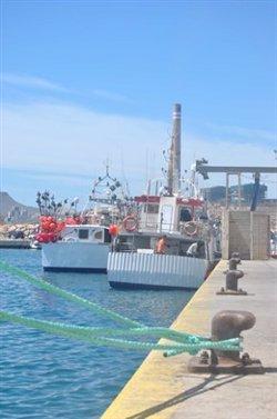 Científicos de ICCAT piden prohibir la pesca del tiburón marrajo dientuso para recuperar la especie en el Atlántico