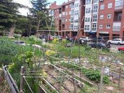 Un estudio asegura que los alimentos de los huertos urbanos en España son seguros para el consumo humano