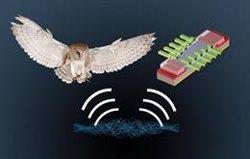 Un estudio sobre el oído de las lechuzas podría ayudar a mejorar la navegación direccional en dispositivos electrónicos