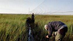 Voluntarios contribuyen al estudio y seguimiento de aves migratorias en Palencia