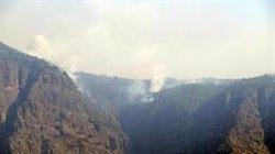 Los fuegos de Canarias han afectado a más de 50 especies de aves, según SEO/BirdLife