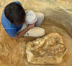 Los trabajos en el yacimiento de Algora (Guadalajara) concluyen con el hallazgo de 400 especímenes del Cretácico