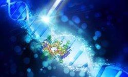 La fragmentación del ADN de los espermatozoides puede causar anomalías en los hijos, según un estudio