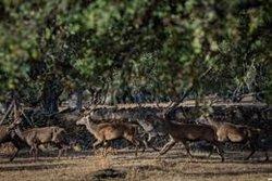 Cazadores piden una licencia interautonómica e incluir la caza en la PAC como herramienta de desarrollo rural