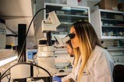 Doce proyectos de investigación españoles, entre los 300 que recibirán financiación del Consejo Europeo de Investigación