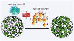 Investigadores descubren que la leucemia mieloide aguda necesita a la vitamina B6 para crecer