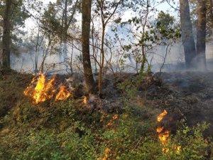 Extinguido el incendio forestal en Ortigueira (A Coruña) tras calcinar casi 19 hectáreas