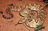 Logran mejorar y reducir la toxicidad de las toxinas del veneno de serpiente para tratar el dolor crónico