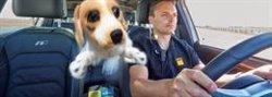 Más del 36% de los españoles viajan en coche con sus mascotas y la mayoría utiliza sistemas de seguridad para ellas