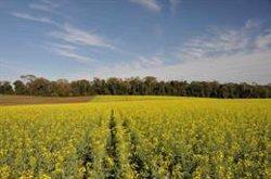 Un estudio con presencia del CSIC constata la urgencia de recuperar un 20% de los hábitats autóctonos en zonas agrícolas