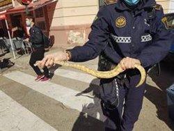 Hallan una serpiente pitón en el interior de un restaurante en Valencia