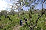 La inestabilidad con chubascos dispersos y con lluvias de barro en el Mediterráneo marcarán el tiempo los próximos días