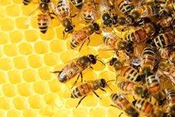 El TUE desestima un recurso de Bayer contra los límites en el uso de dos plaguicidas perjudiciales para las abejas