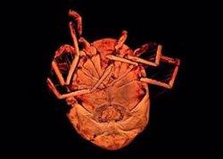 Describen una nueva especie de ácaro en las charcas de Alpedrete (Madrid)