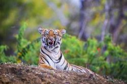 WWF alerta sobre la disminución
